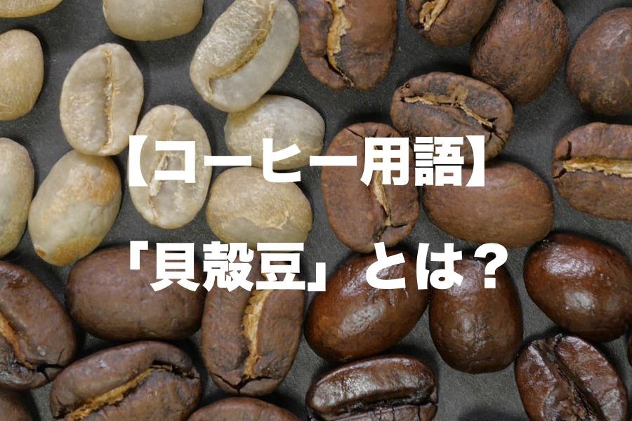 貝殻豆とは